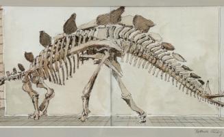 Stegosaurus   (699, Klinkig) – VERKAUFT